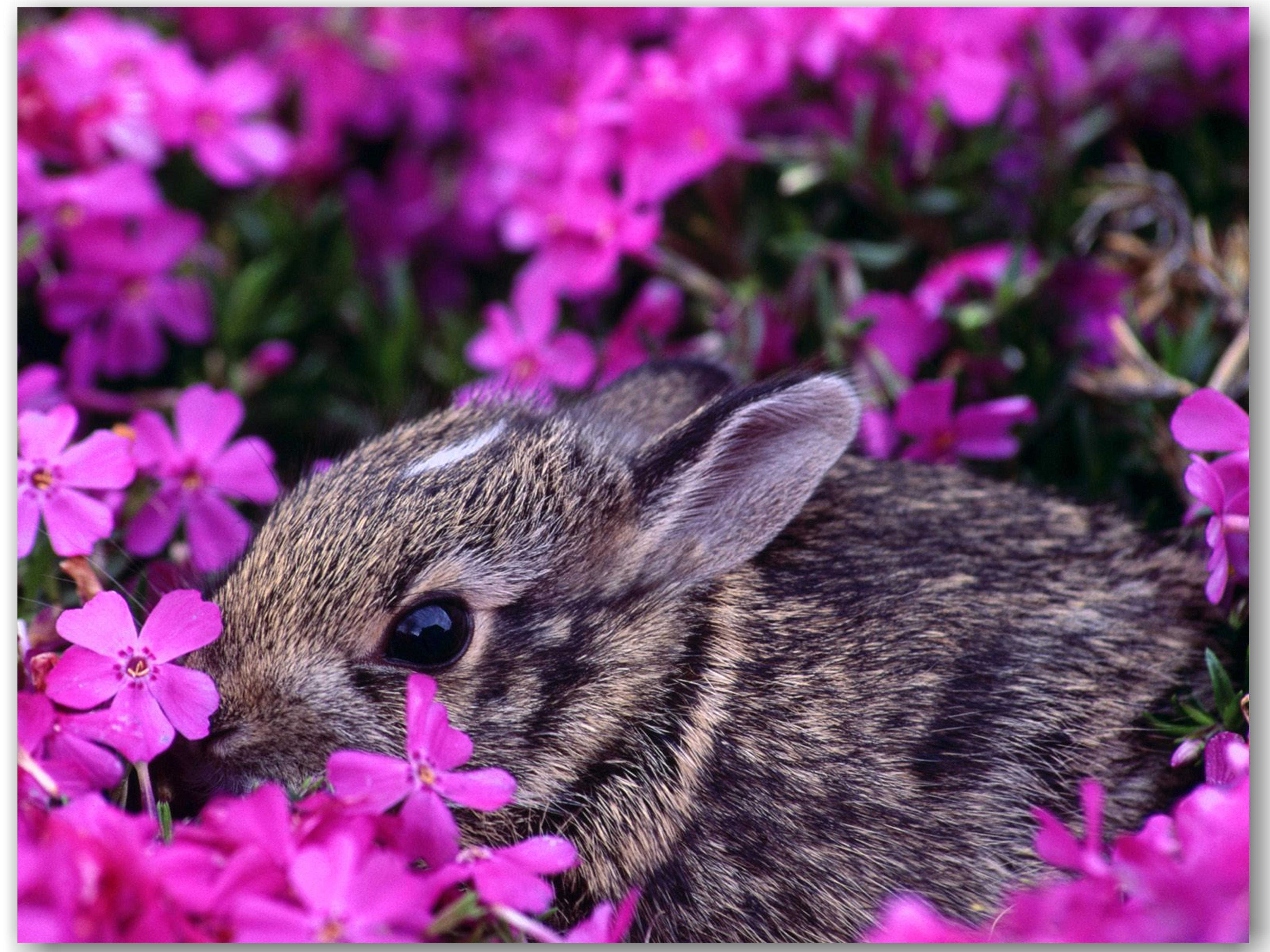 16989 Screensavers and Wallpapers Rabbits for phone. Download Animals, Flowers, Rabbits, Violet pictures for free