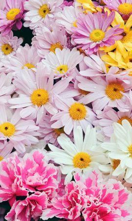 4199 скачать обои Растения, Цветы, Фон - заставки и картинки бесплатно