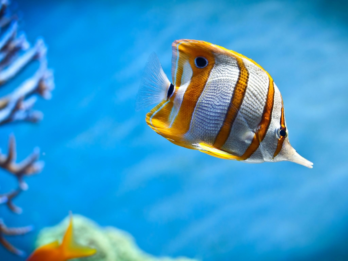 31739 download wallpaper Animals, Fishes screensavers and pictures for free