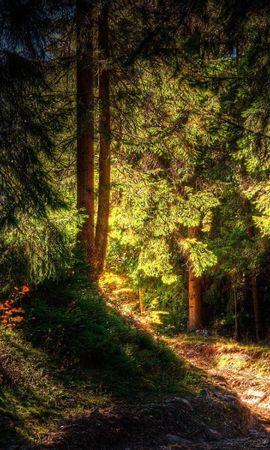 28286 скачать обои Пейзаж, Деревья, Солнце - заставки и картинки бесплатно