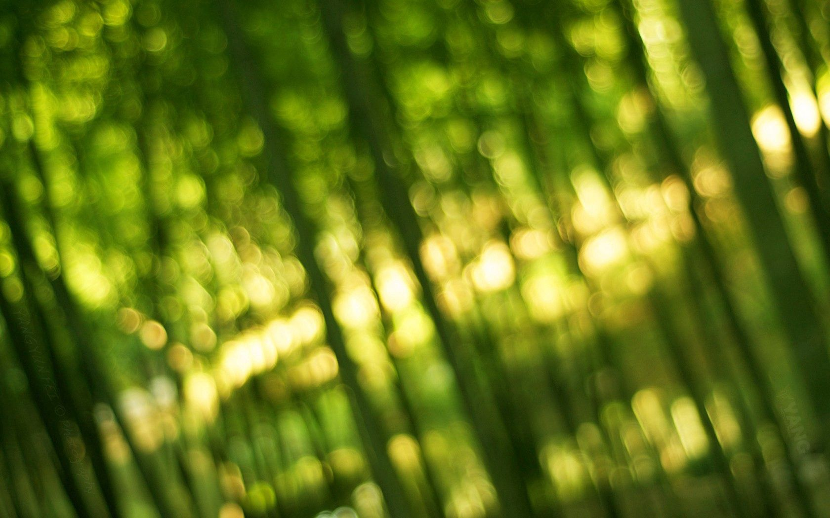 100175 download wallpaper Macro, Bamboo, Greens, Shine, Light, Bokeh, Boquet screensavers and pictures for free