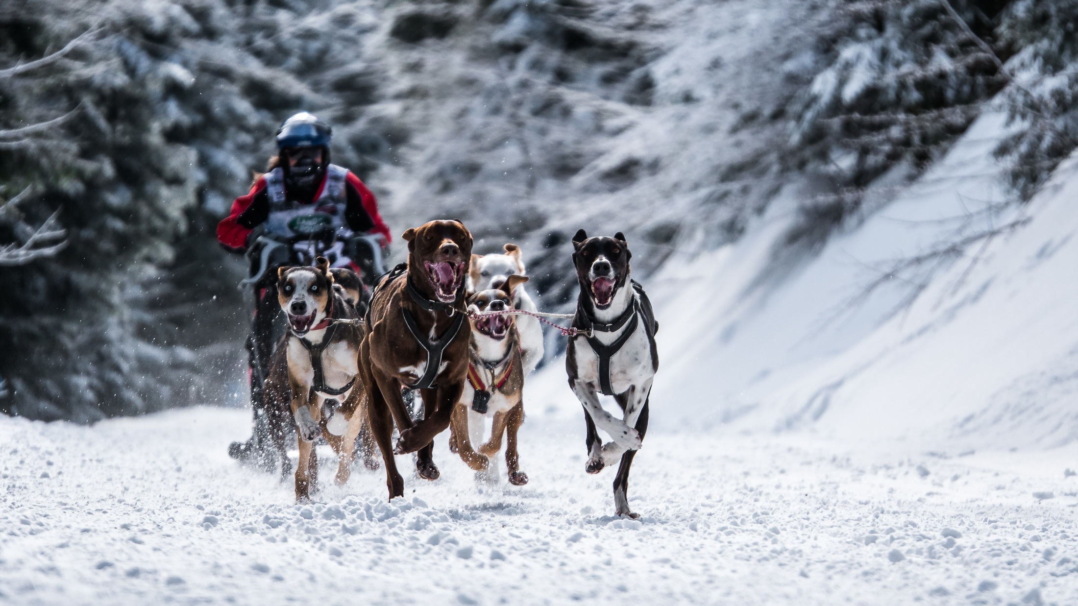 143115 Screensavers and Wallpapers Races for phone. Download Sports, Races, Snow, Dog pictures for free