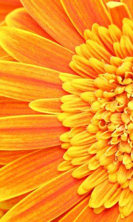 25410 скачать обои Растения, Цветы - заставки и картинки бесплатно