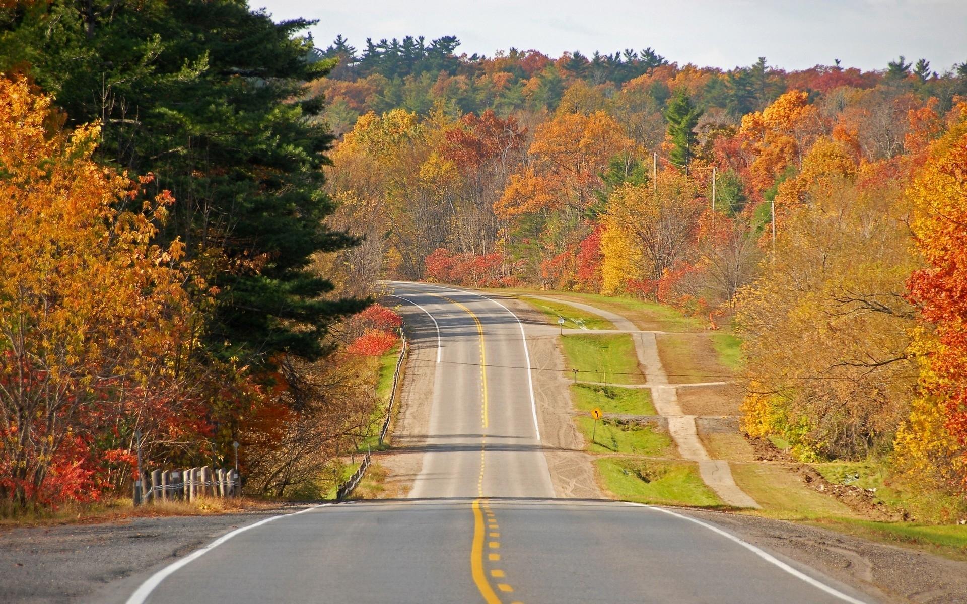 8162 скачать обои Пейзаж, Деревья, Дороги, Осень - заставки и картинки бесплатно