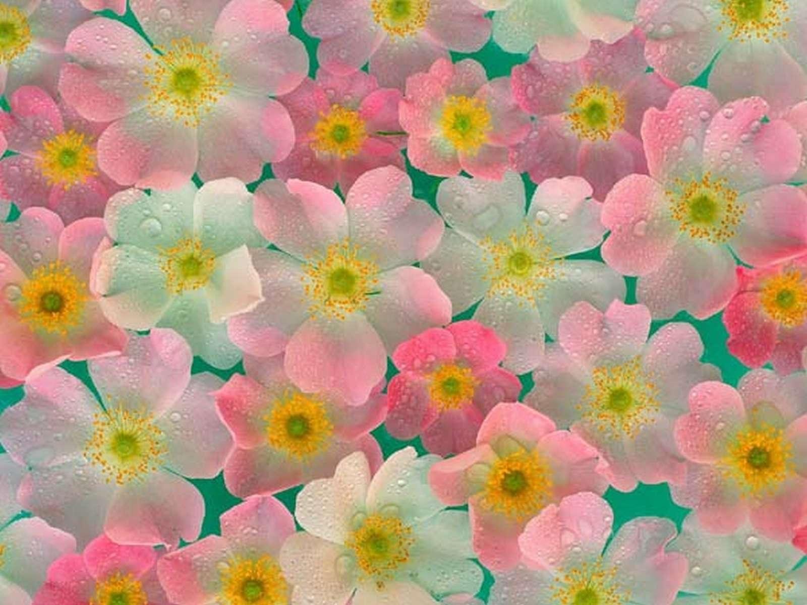 9466 descargar fondo de pantalla Flores, Imágenes: protectores de pantalla e imágenes gratis