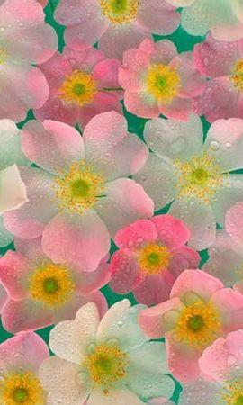 9466 скачать обои Цветы, Рисунки - заставки и картинки бесплатно