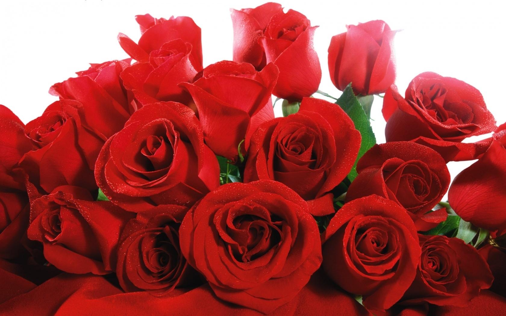 Скачать картинку Растения, Цветы, Розы в телефон бесплатно.