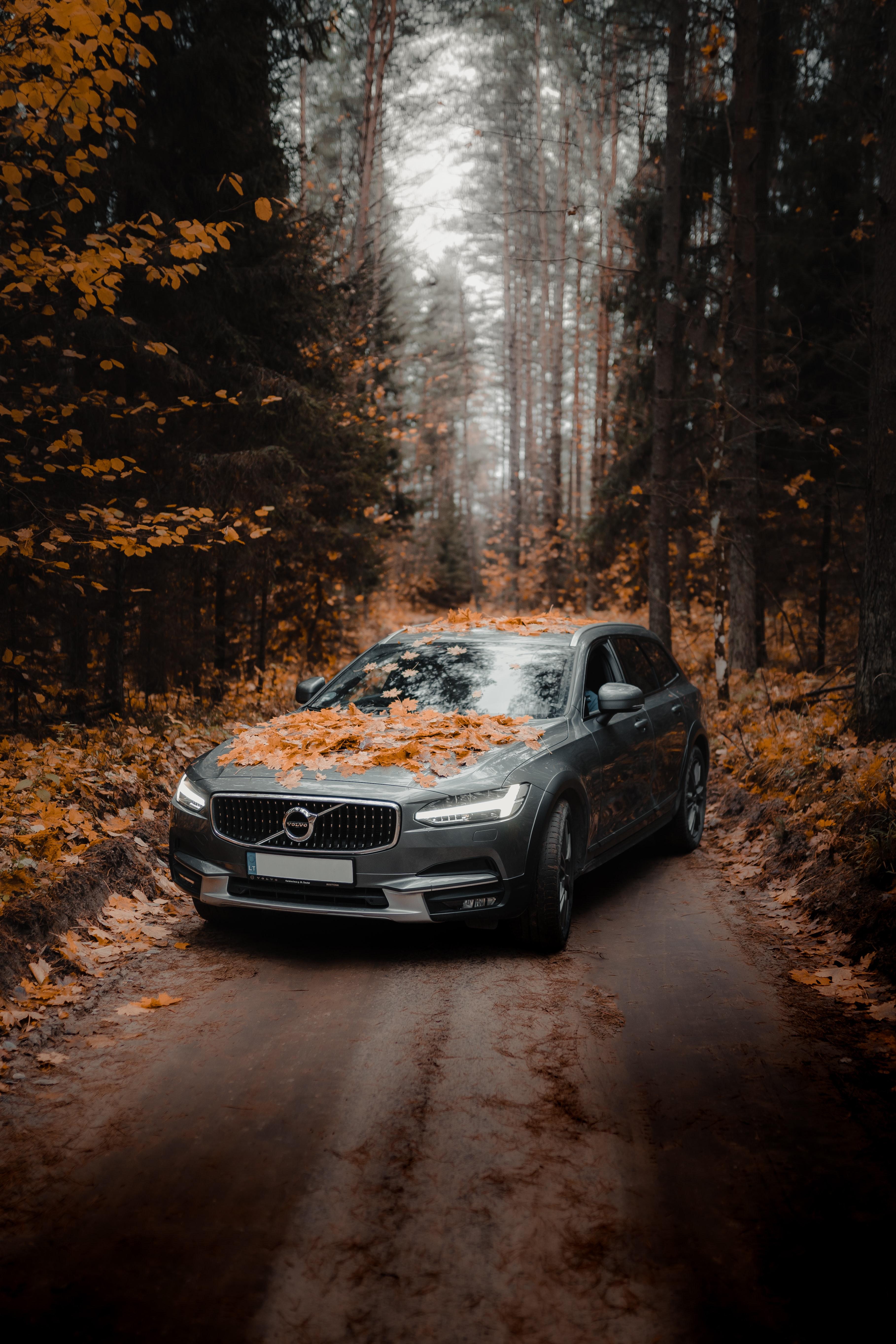 55508 скачать обои Вольво (Volvo), Автомобиль, Осень, Тачки (Cars), Лес, Серый - заставки и картинки бесплатно
