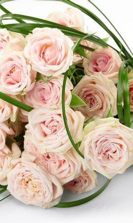 22998 télécharger le fond d'écran Fêtes, Plantes, Fleurs, Roses, Bouquets - économiseurs d'écran et images gratuitement
