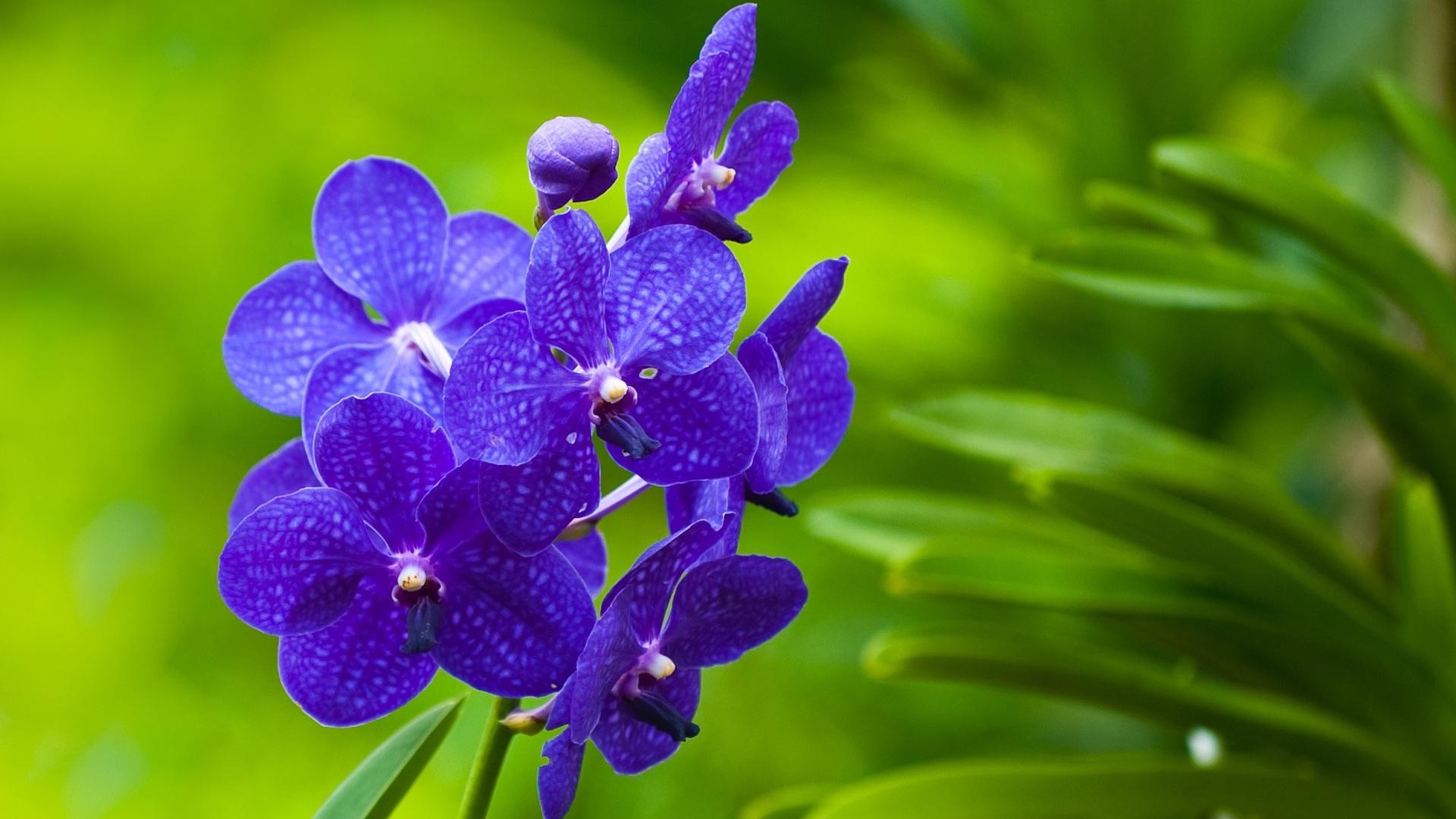 42784 Заставки и Обои Фиалки на телефон. Скачать Растения, Цветы, Фиалки картинки бесплатно