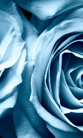 20320 скачать обои Растения, Цветы, Розы - заставки и картинки бесплатно