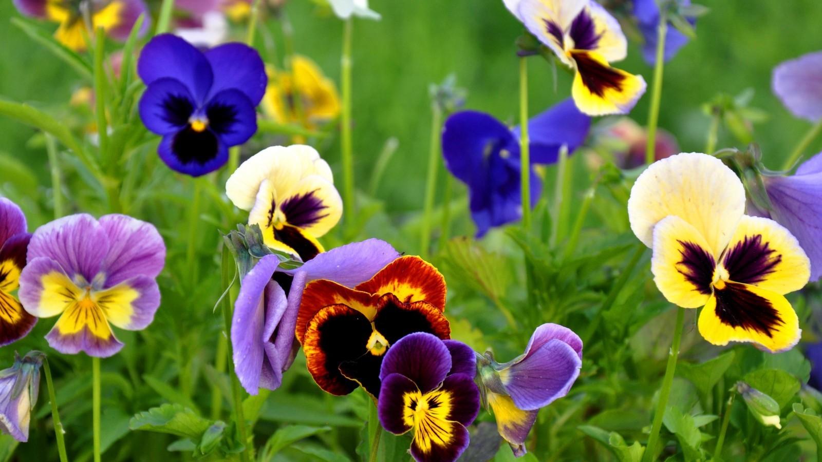 22008 скачать обои Растения, Цветы - заставки и картинки бесплатно