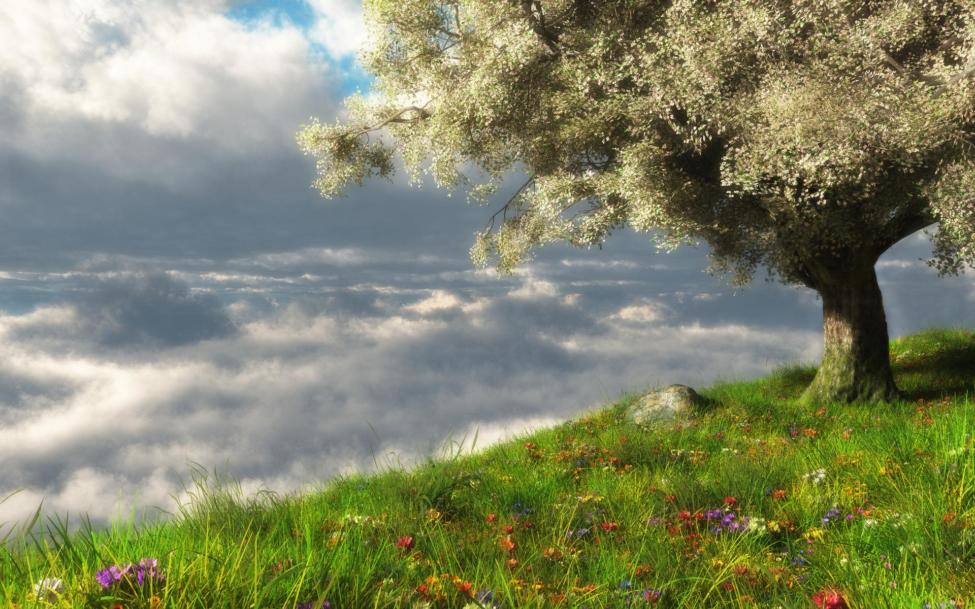11361 скачать обои Пейзаж, Деревья, Трава - заставки и картинки бесплатно