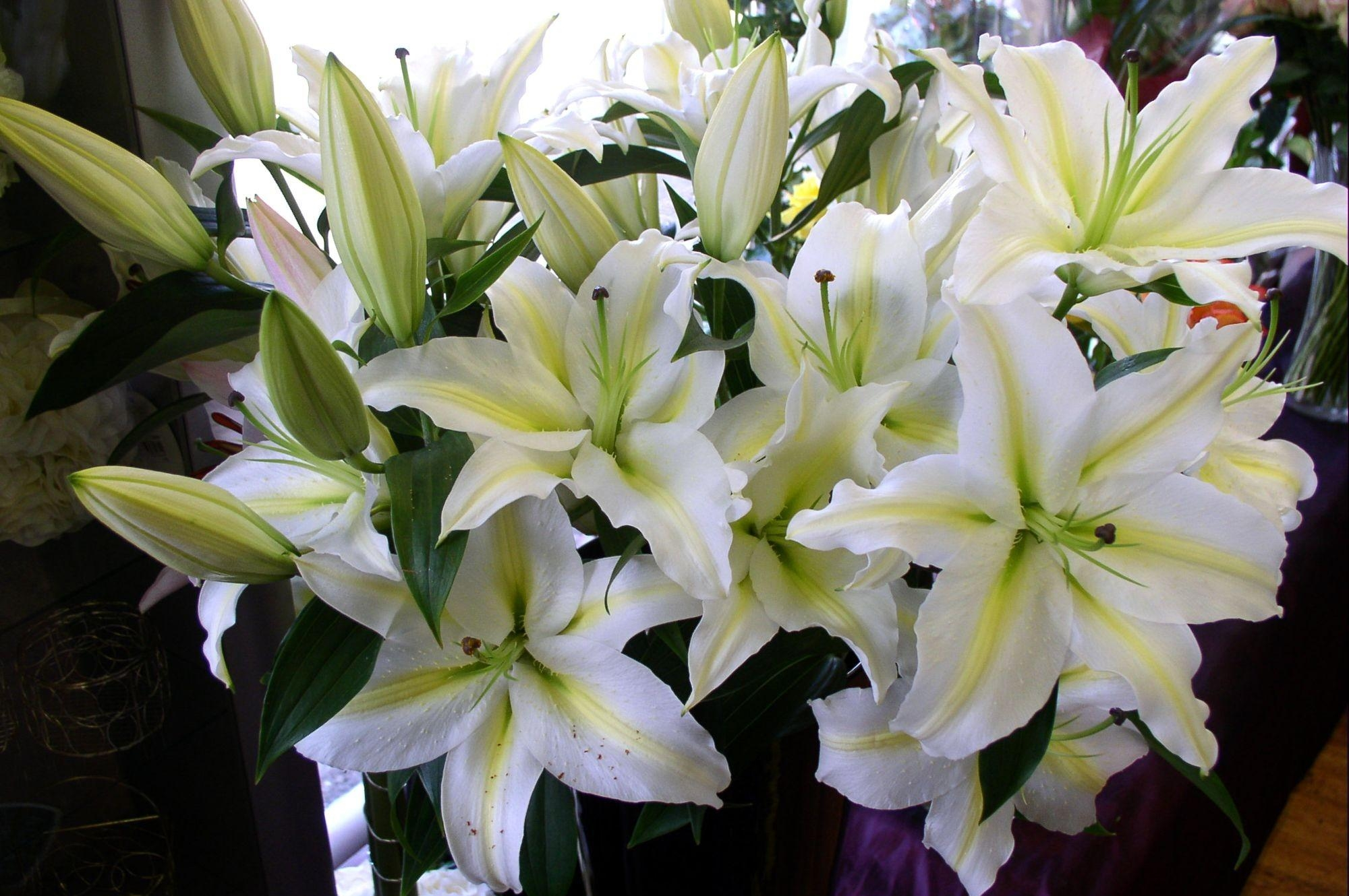 94520 download wallpaper Flowers, Lilies, Bouquet, Buds, Snow White screensavers and pictures for free