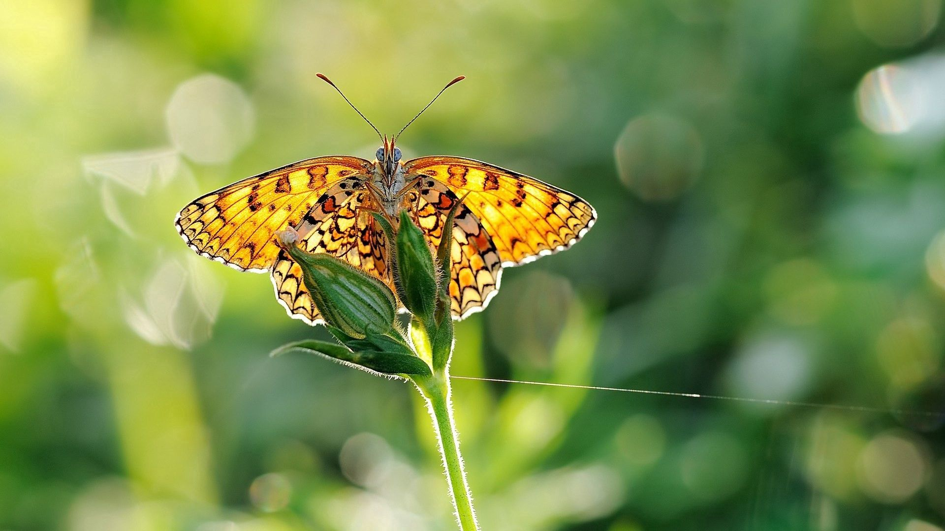 70533 Screensavers and Wallpapers Butterfly for phone. Download Grass, Plant, Macro, Butterfly pictures for free