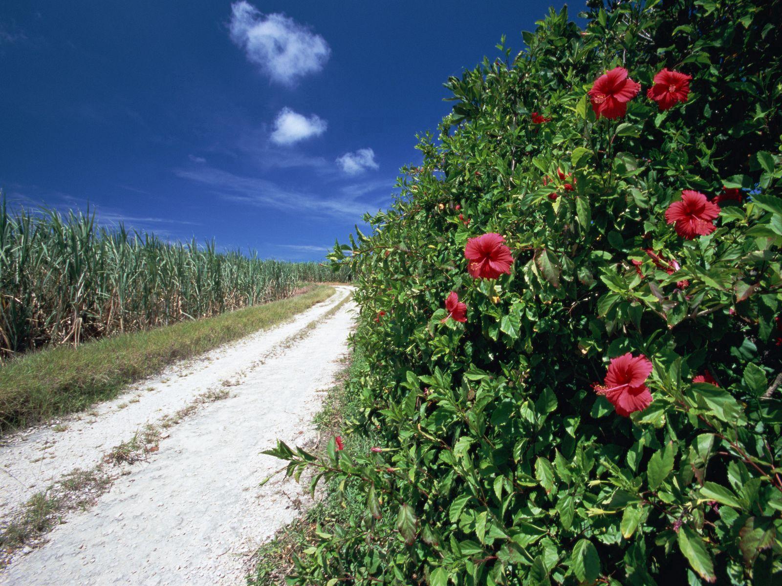 140296 скачать обои Природа, Дорога, Поле, Трава, Шиповник, Цветы - заставки и картинки бесплатно