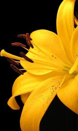 15937 descargar fondo de pantalla Plantas, Flores: protectores de pantalla e imágenes gratis