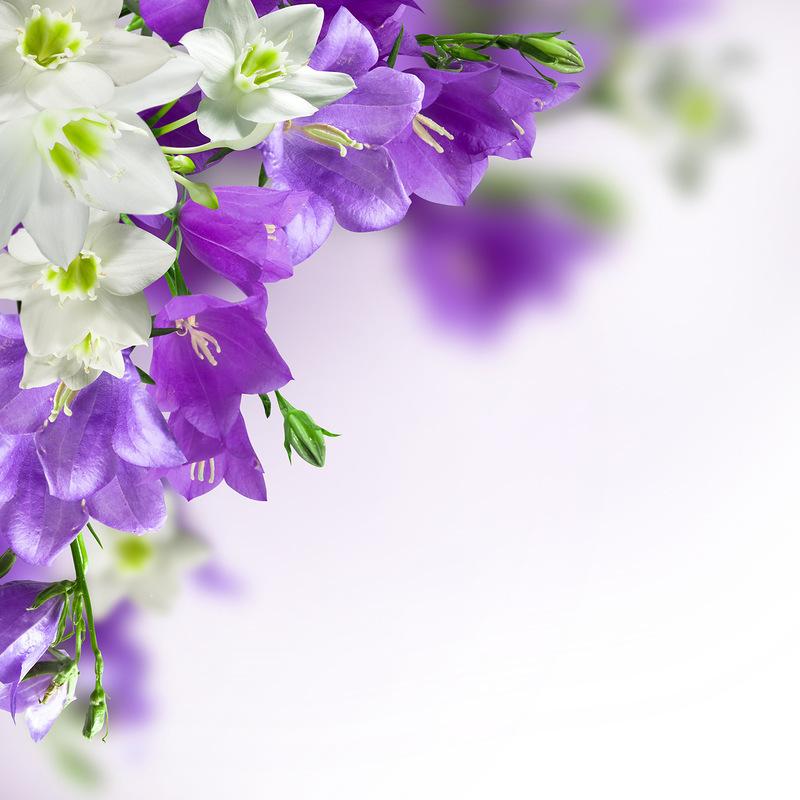 48083 скачать обои Цветы, Растения - заставки и картинки бесплатно
