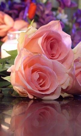 44747 télécharger le fond d'écran Plantes, Fleurs, Roses - économiseurs d'écran et images gratuitement