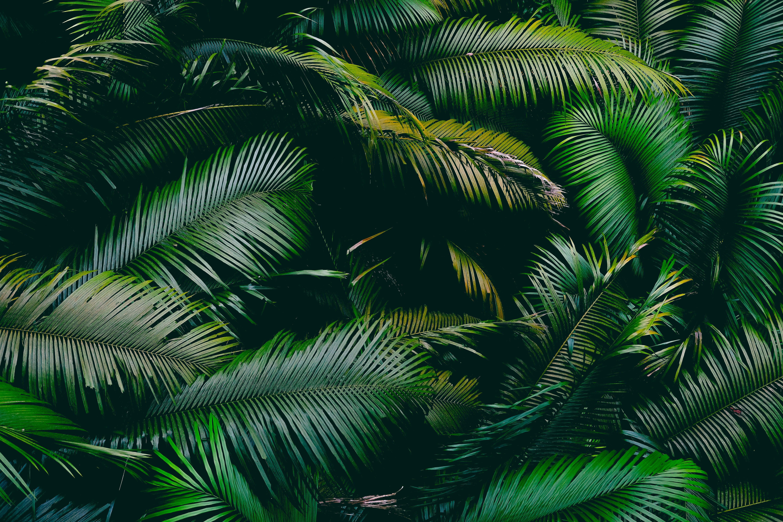 免費壁紙102866:性质, 棕榈, 帕尔马, 叶, 分行, 分支, 绿色的 下載手機圖片