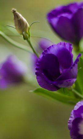 42897 скачать обои Растения, Цветы - заставки и картинки бесплатно