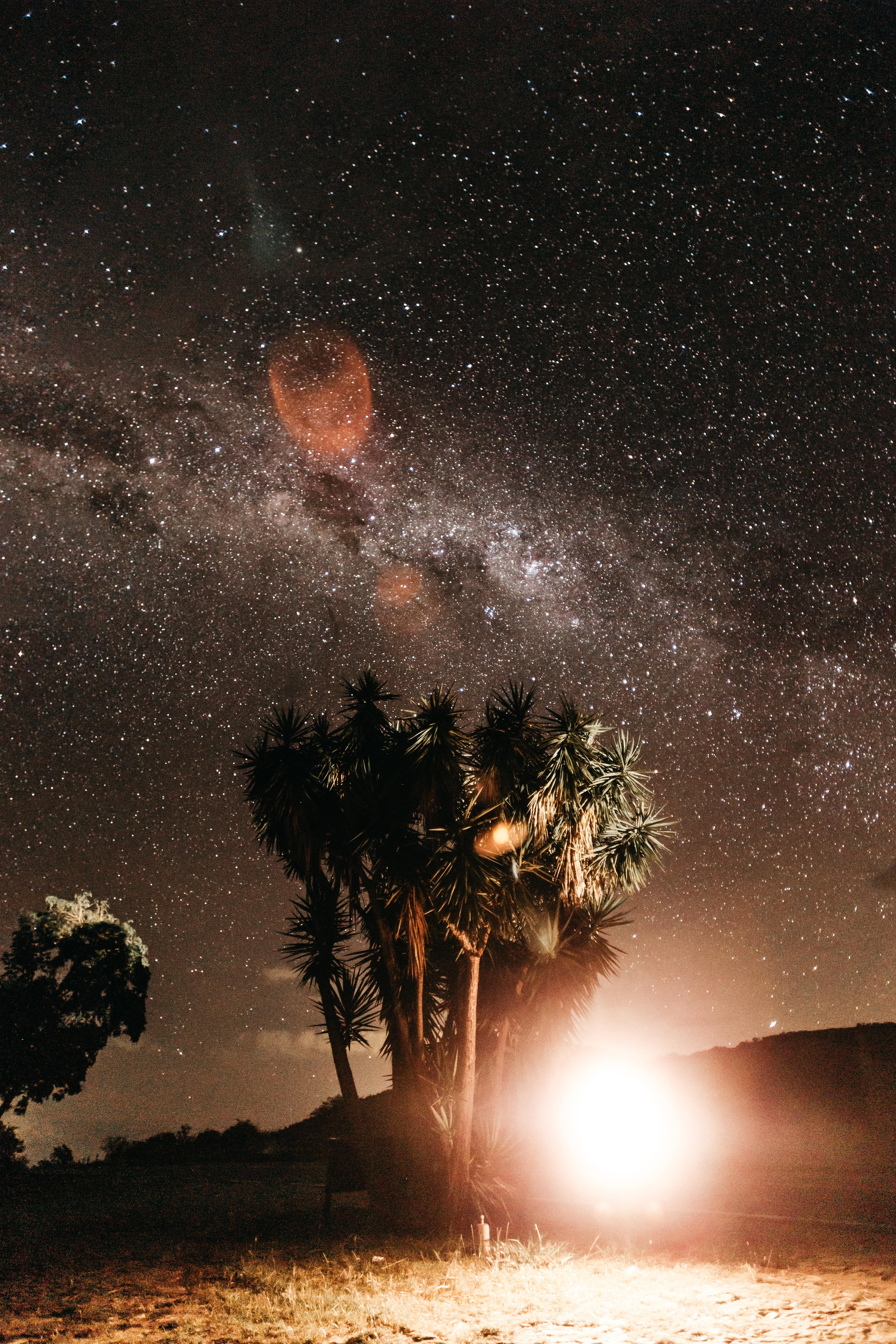62572 免費下載壁紙 性质, 夜, 星空, 闪光, 闪光灯, 明亮的, 明亮, 强光, 高光, 棕榈 屏保和圖片