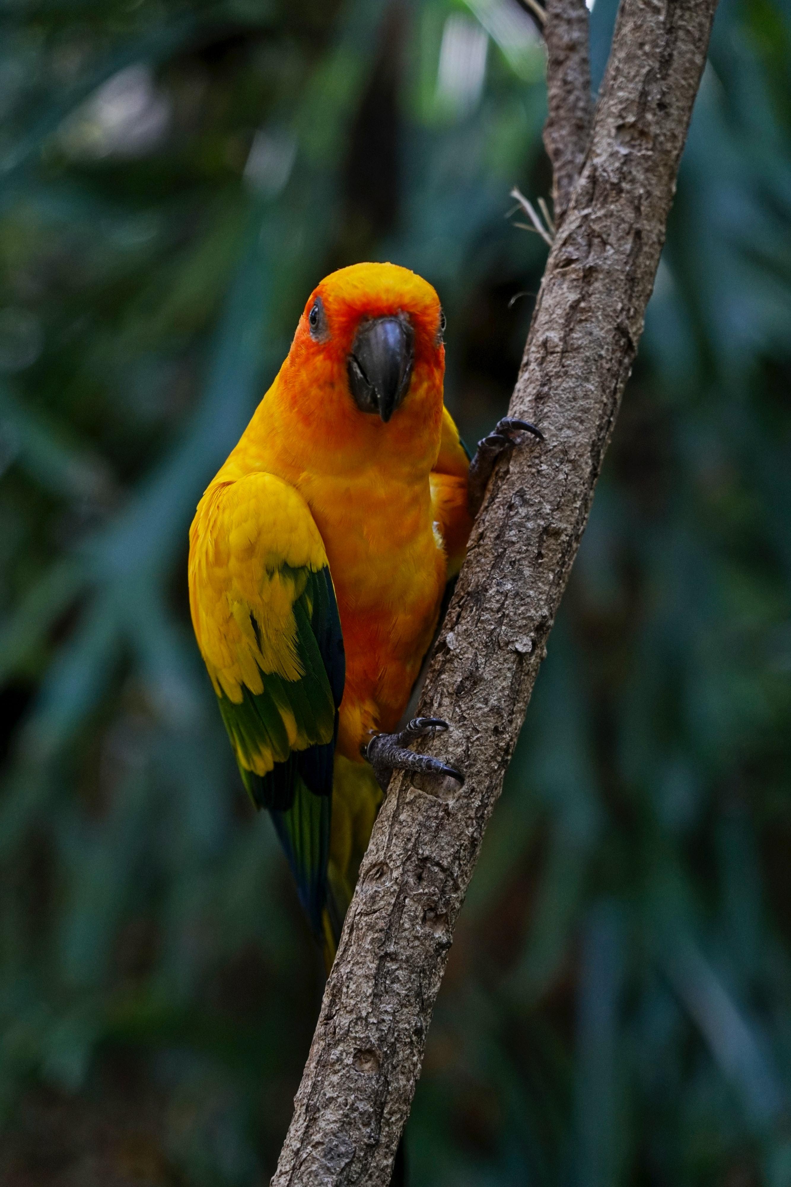 73938 Заставки и Обои Попугаи на телефон. Скачать Попугаи, Животные, Птица, Разноцветный, Ветка, Аратинга картинки бесплатно