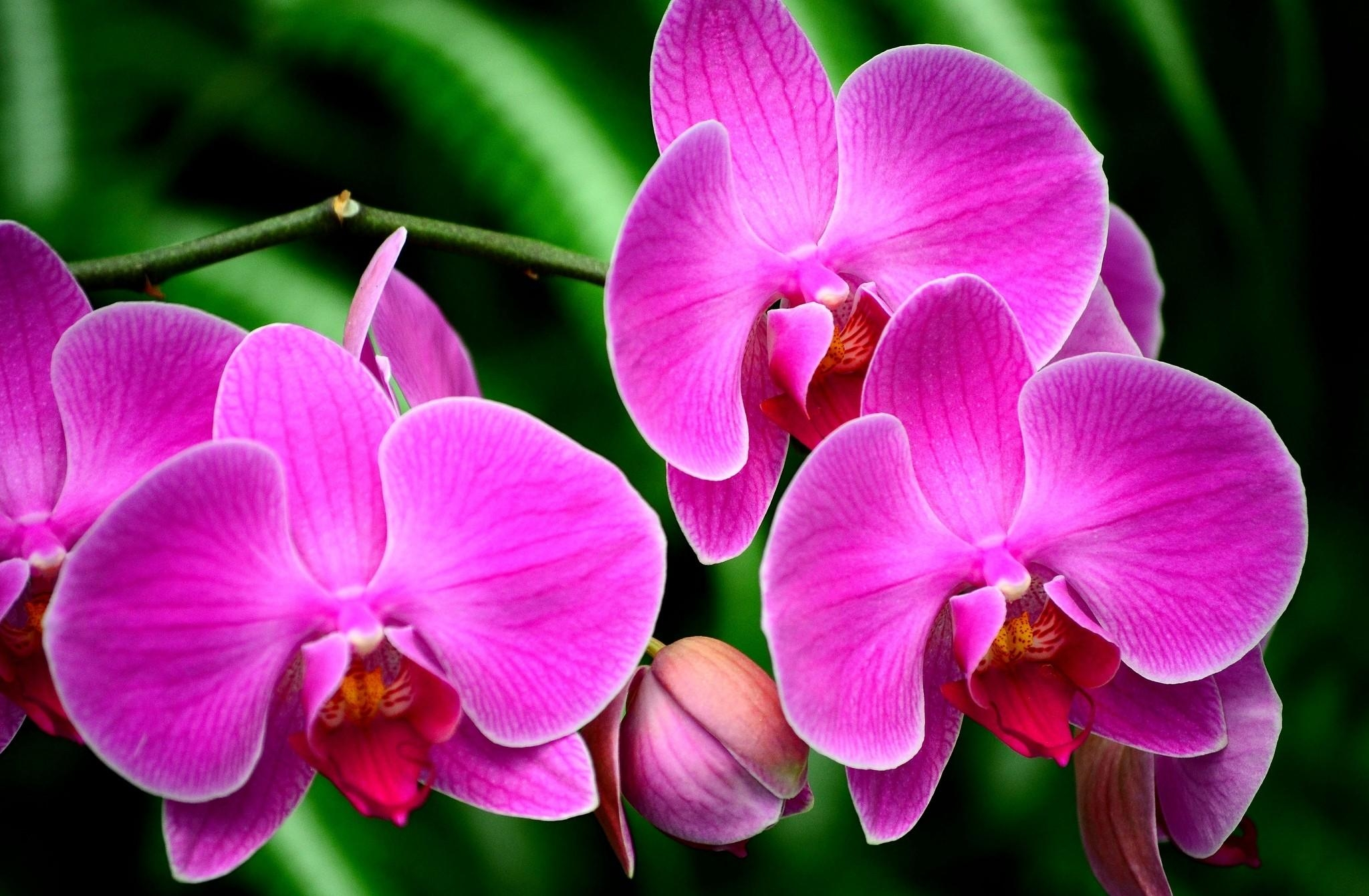 121245 скачать обои Цветы, Орхидея, Цветок, Ветка, Экзотика - заставки и картинки бесплатно
