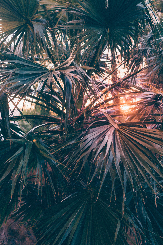82614壁紙のダウンロード自然, 葉, ブランチ, 枝, ビーム, 光線, 日光, パームス-スクリーンセーバーと写真を無料で
