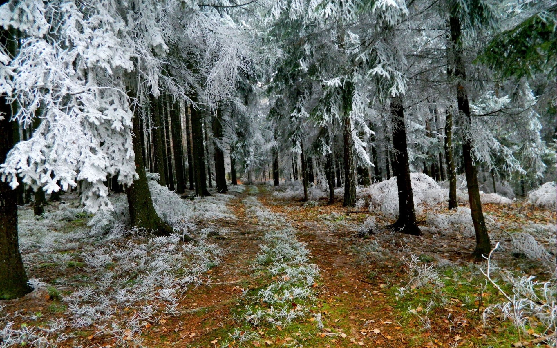 121488 download wallpaper Branch, Ate, Winter, Nature, Road, Branches, Land, Earth, Frost, Hoarfrost screensavers and pictures for free