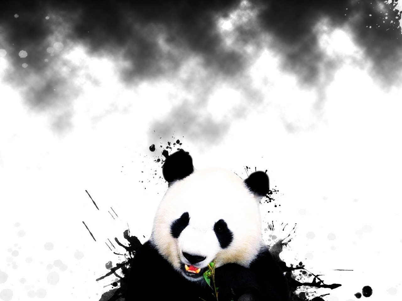 5695 download wallpaper Animals, Bears, Pandas screensavers and pictures for free