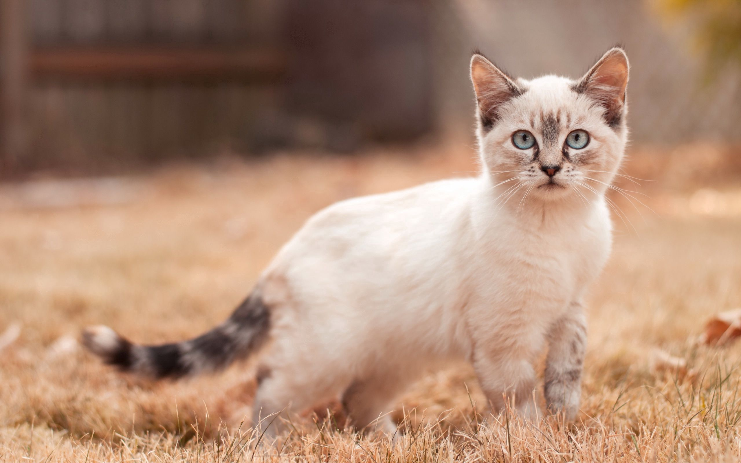 102859 Screensavers and Wallpapers Nice for phone. Download Animals, Kitty, Kitten, Stroll, Nice, Sweetheart pictures for free