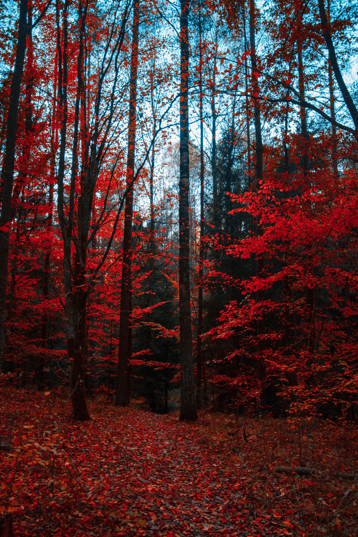 65625 Hintergrundbild herunterladen Herbst, Natur, Bäume, Wald, Laub, Herbstfarben - Bildschirmschoner und Bilder kostenlos