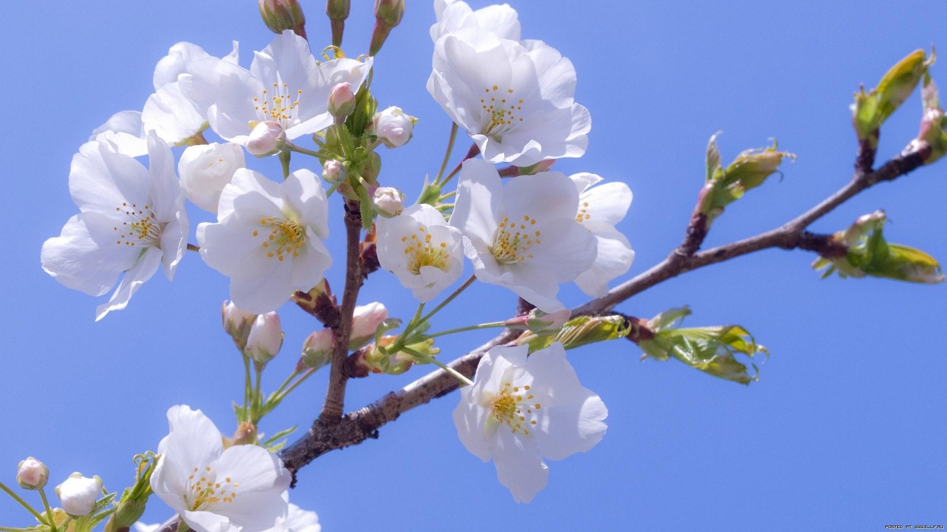 25743 скачать обои Растения, Цветы, Деревья - заставки и картинки бесплатно