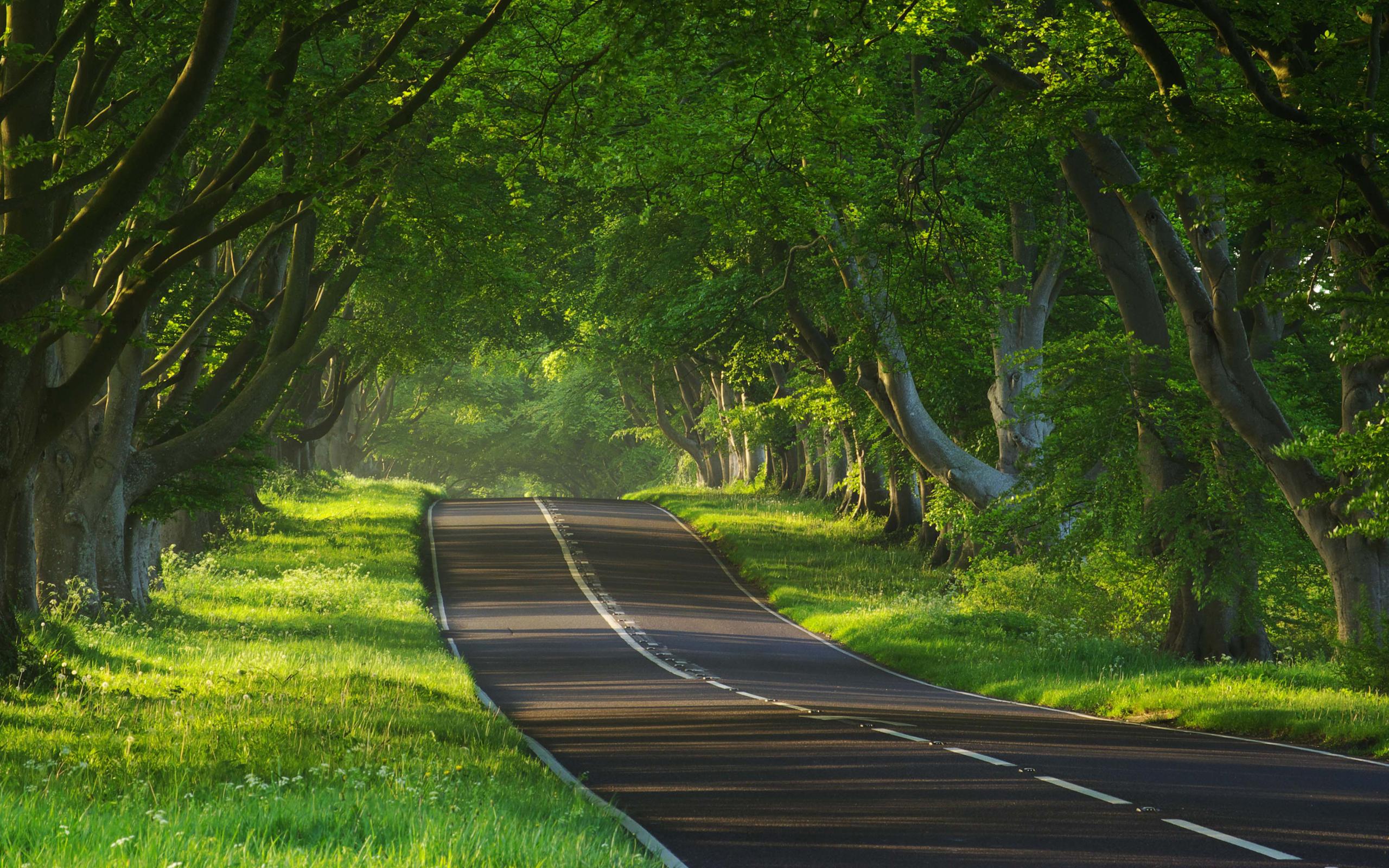 12305 descargar fondo de pantalla Paisaje, Árboles, Carreteras: protectores de pantalla e imágenes gratis