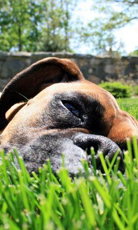 46148 baixar papel de parede Animais, Cães - protetores de tela e imagens gratuitamente
