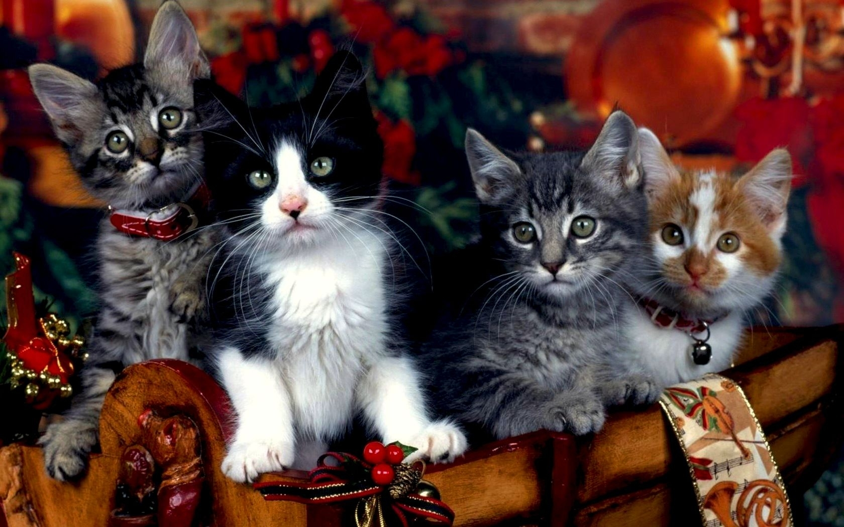 49034 download wallpaper Animals, Cats screensavers and pictures for free