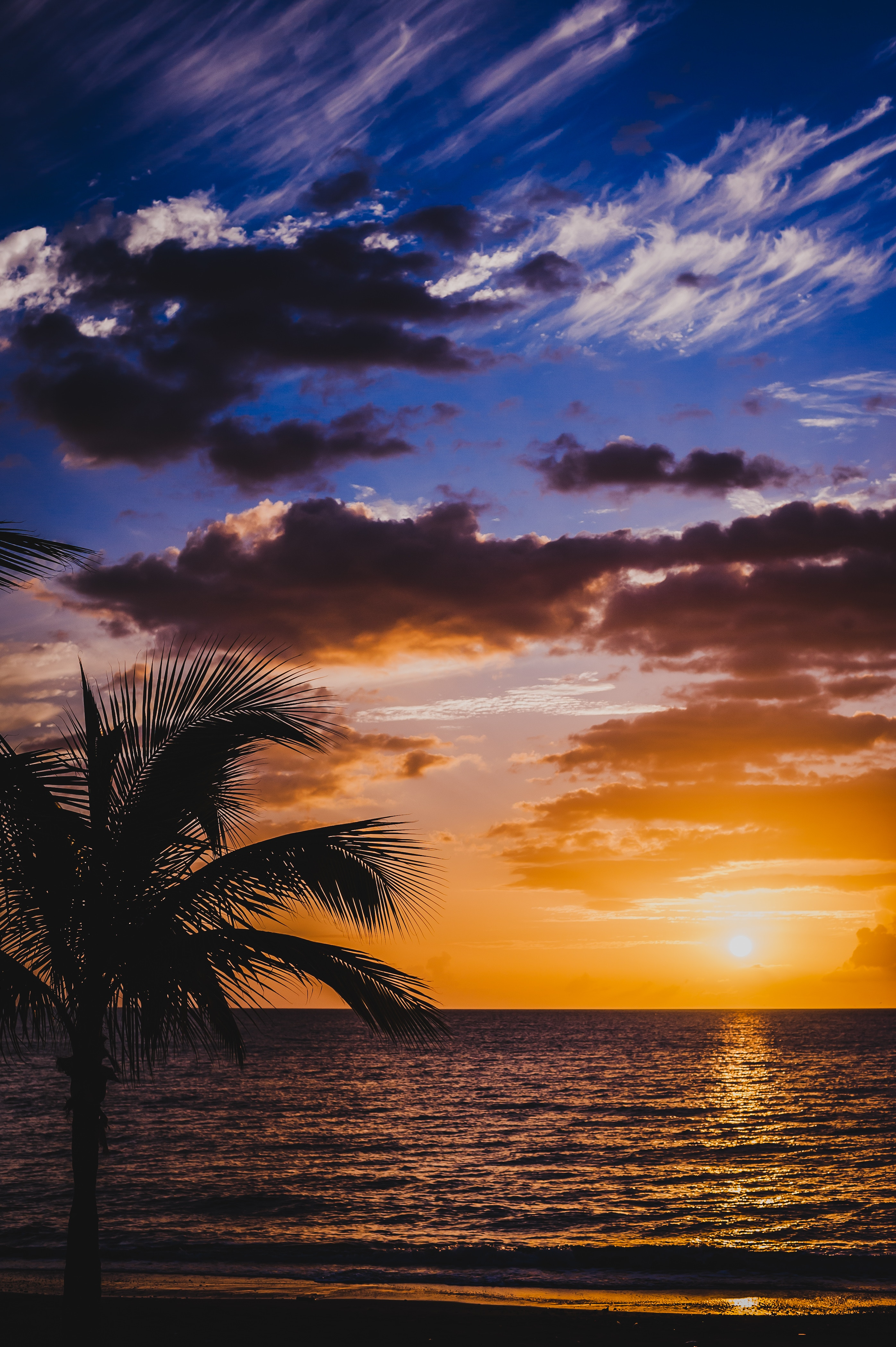 139460 download wallpaper Nature, Palm, Sea, Sunset, Surf, Horizon, Sky, Clouds screensavers and pictures for free