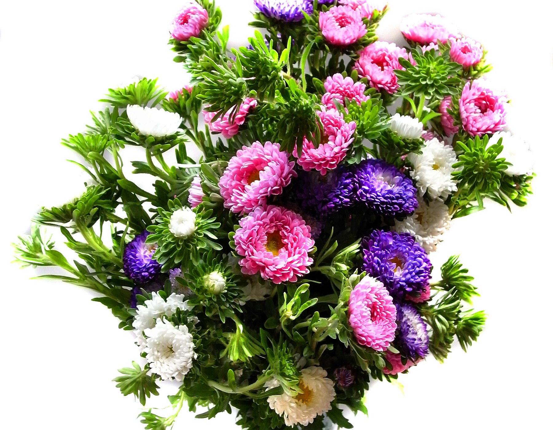 140611 скачать обои Цветы, Букет, Яркий, Красочный, Разноцветный, Хризантемы - заставки и картинки бесплатно