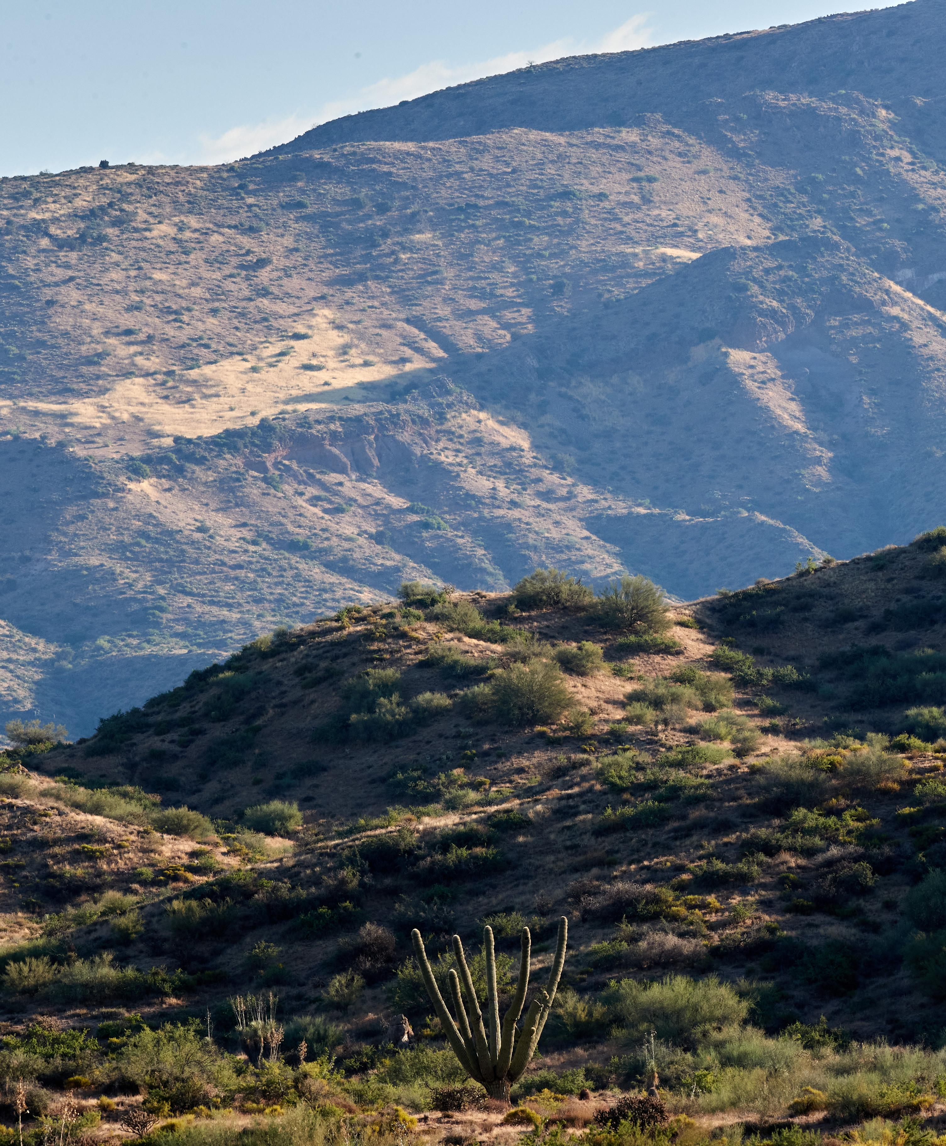 155851 descargar fondo de pantalla Naturaleza, Las Colinas, Colinas, Hierba, Pendiente, Cuesta, Cactus: protectores de pantalla e imágenes gratis