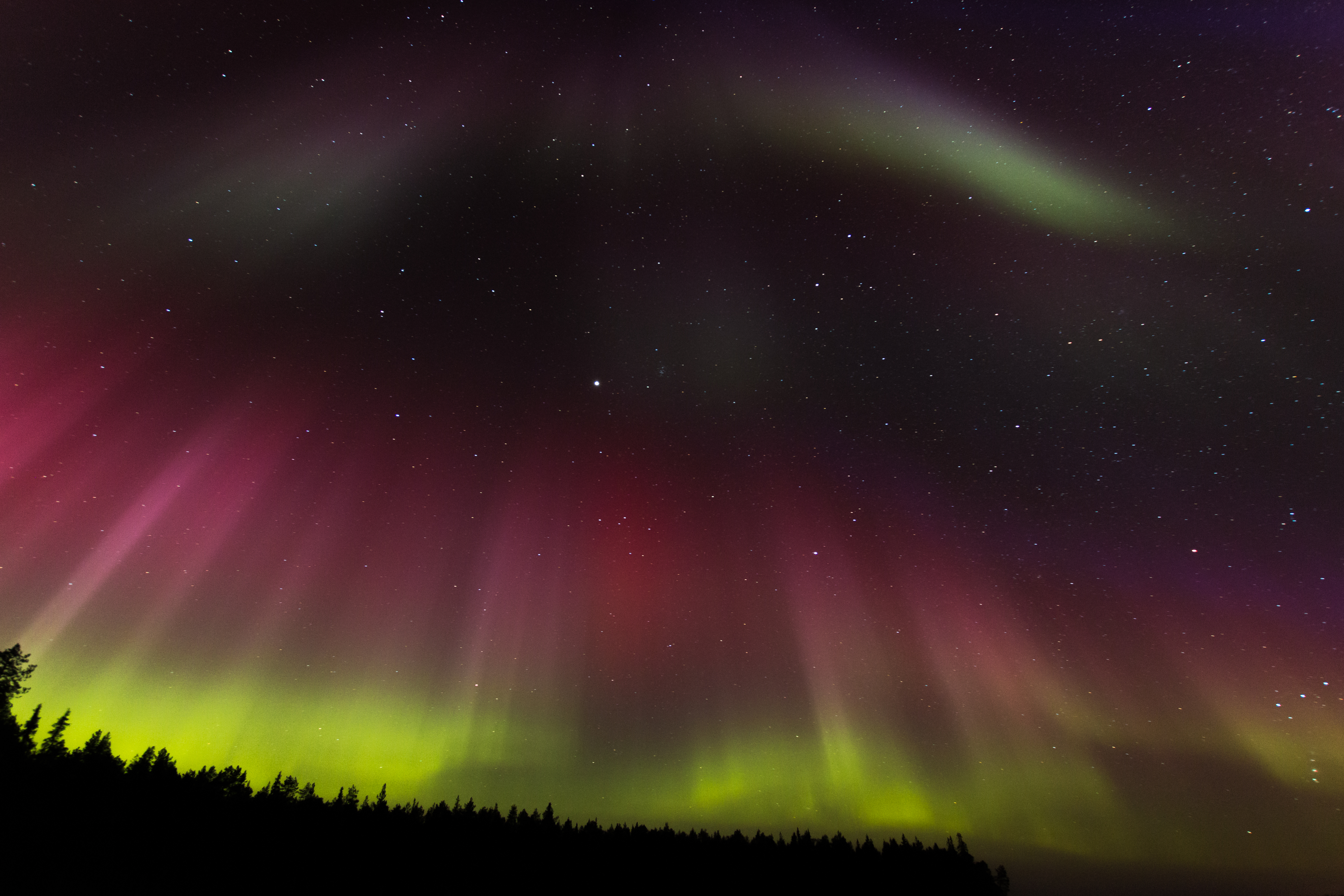 158114 descargar fondo de pantalla Naturaleza, Auroras Boreales, Aurora Boreal, Aurora, Cielo Estrellado, Árboles: protectores de pantalla e imágenes gratis