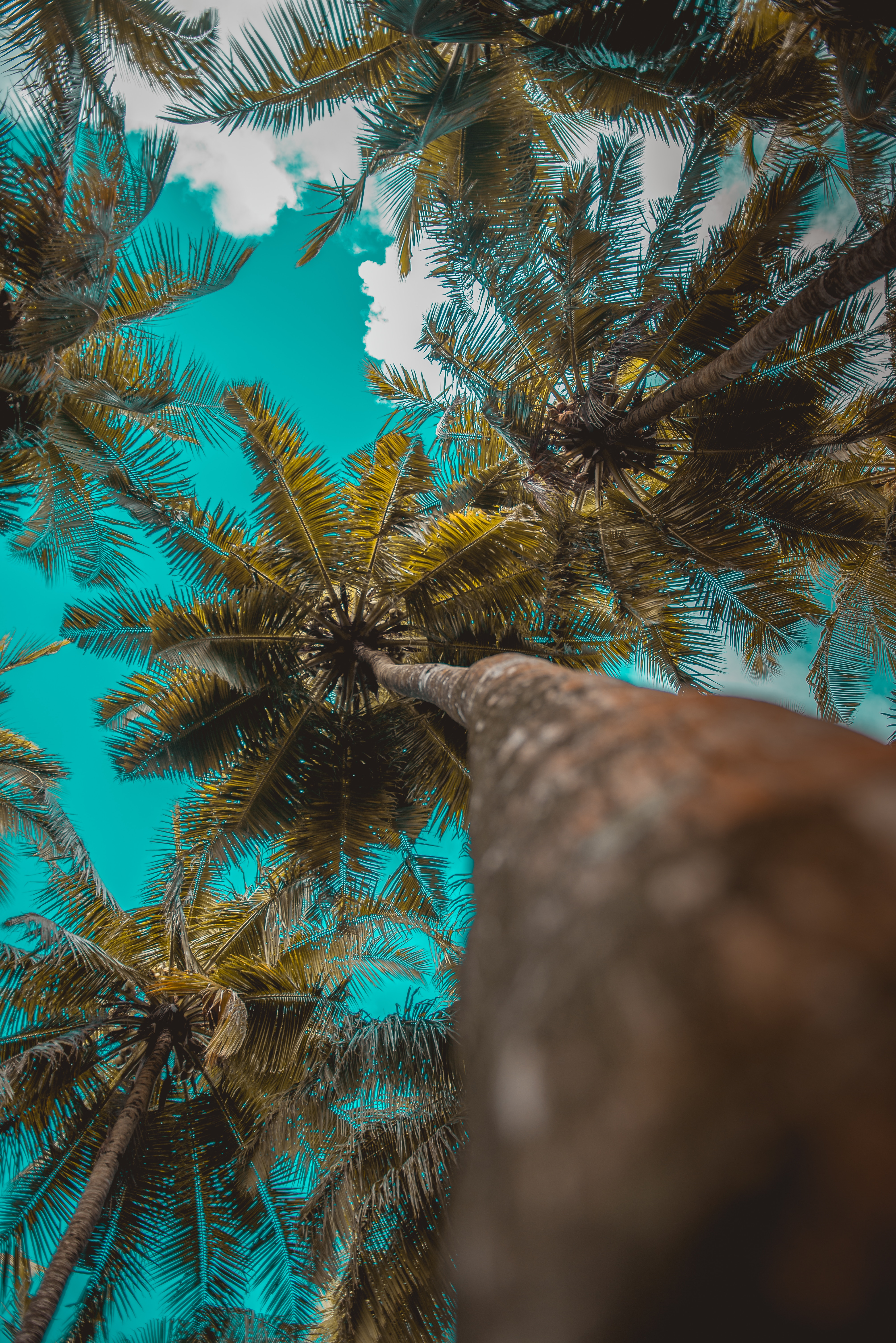 150494 download wallpaper Nature, Trees, Branches, Tropics, Sky, Clouds, Palms screensavers and pictures for free