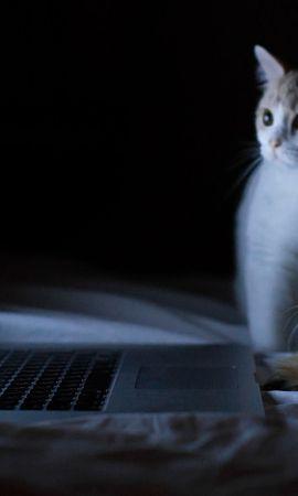 112708 baixar papel de parede Animais, Gatos, Casal, Par, Caderno, Computador Portátil, Deitar-Se, Mentir, Relaxamento, Descansar, Curiosidade - protetores de tela e imagens gratuitamente
