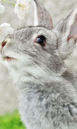 21245 download wallpaper Animals, Rabbits screensavers and pictures for free