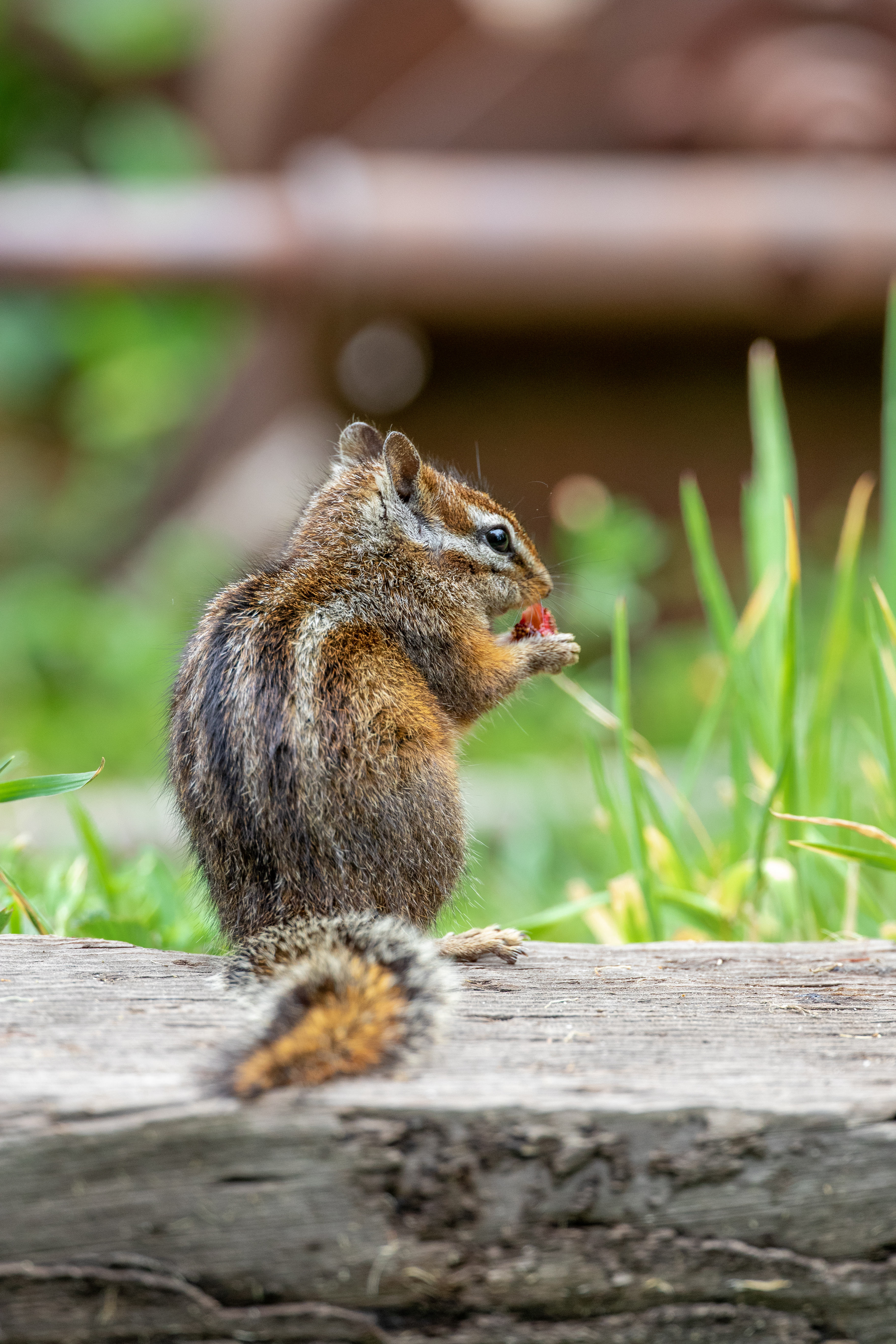124338 download wallpaper Animals, Chipmunk, Animal, Nice, Sweetheart, Wildlife screensavers and pictures for free