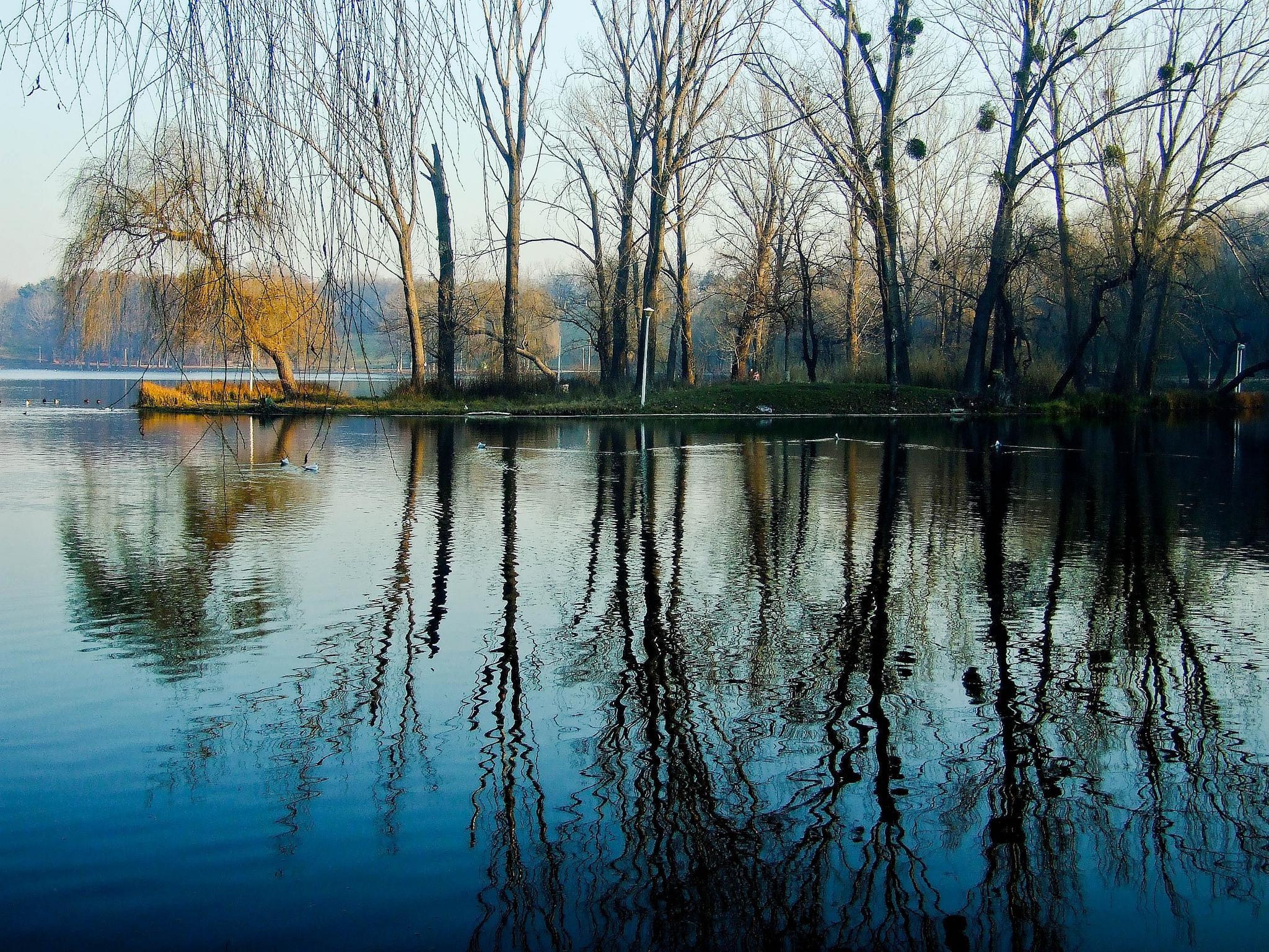 119530壁紙のダウンロード自然, 春, 公園, 木, 水, 湖-スクリーンセーバーと写真を無料で