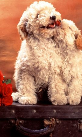 41205 download wallpaper Animals, Dogs screensavers and pictures for free