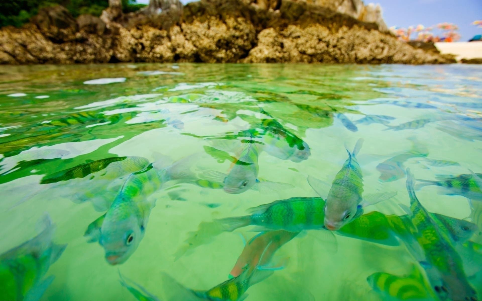 139052 download wallpaper Nature, Fishes, Fish, Water, Transparent, Rocks screensavers and pictures for free