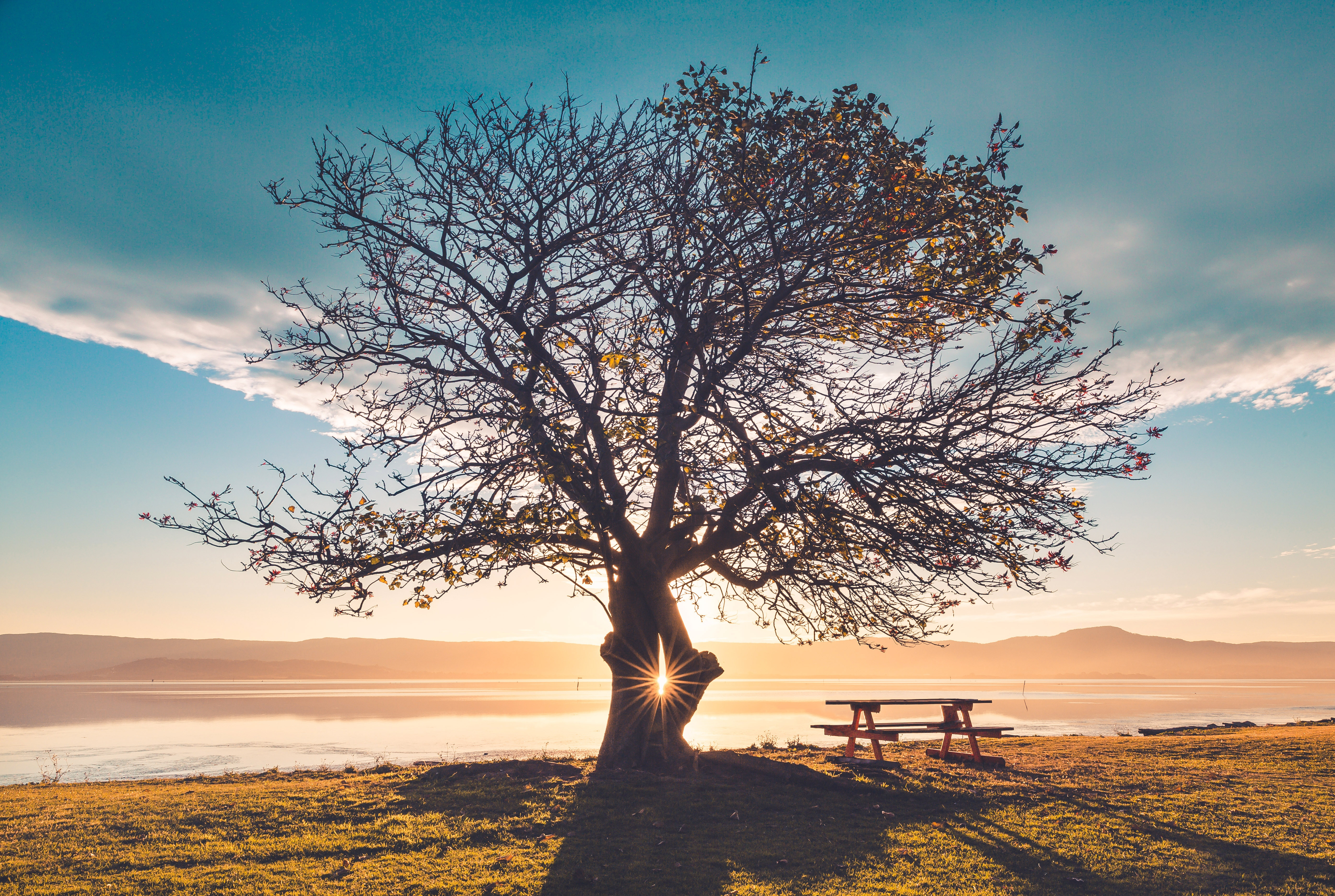 108915 Screensavers and Wallpapers Bench for phone. Download Nature, Shine, Light, Wood, Tree, Table, Bench pictures for free