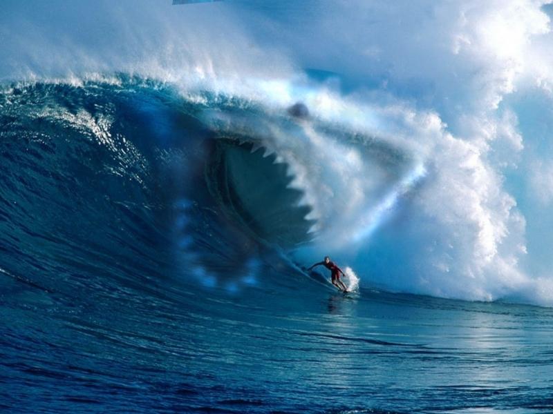 42665 papel de parede 540x960 em seu telefone gratuitamente, baixe imagens Esportes, Mar, Surf 540x960 em seu celular